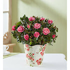 Classic Rose Small - Plants by 1-800 Flowers