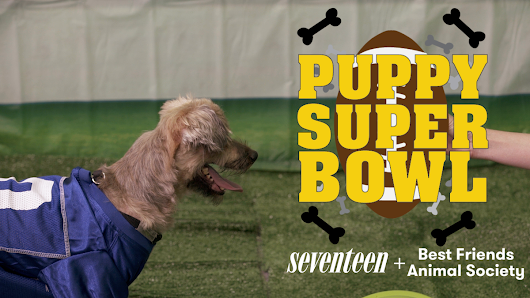 The Puppy Super Bowl is even better than the real thing