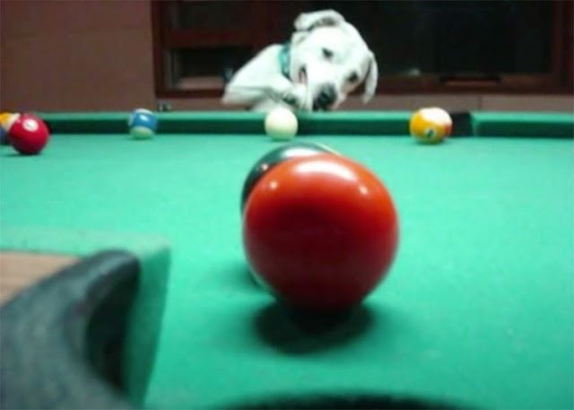 Dogs Who Play Pool