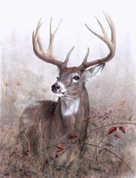 images  art  whitetail  pinterest