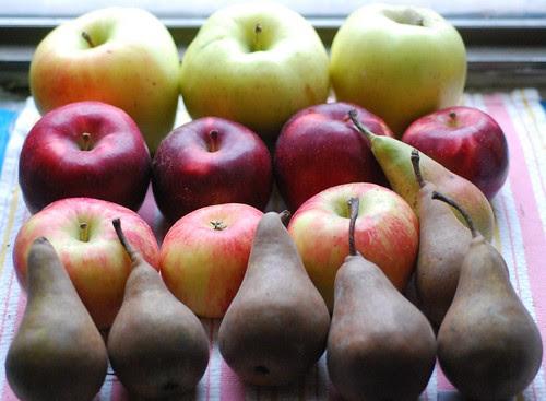 CSA Week 23-Fruit