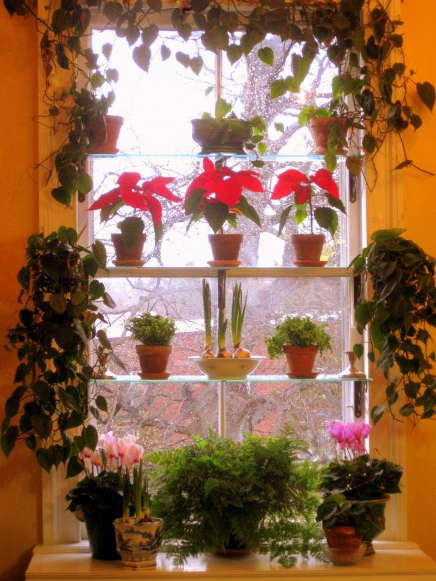 window garden with flowers