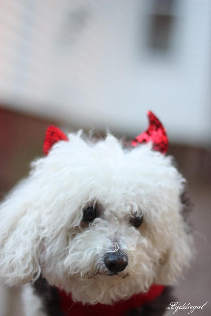 Chloe, the little devil
