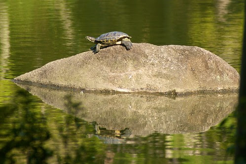 Mirrored turtle