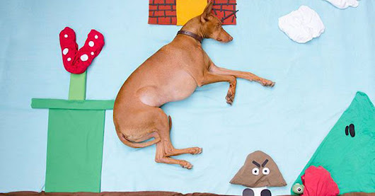 Photo series takes napping dog on whimsical adventures