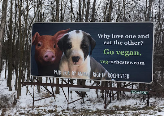 Vegan Billboard is Up