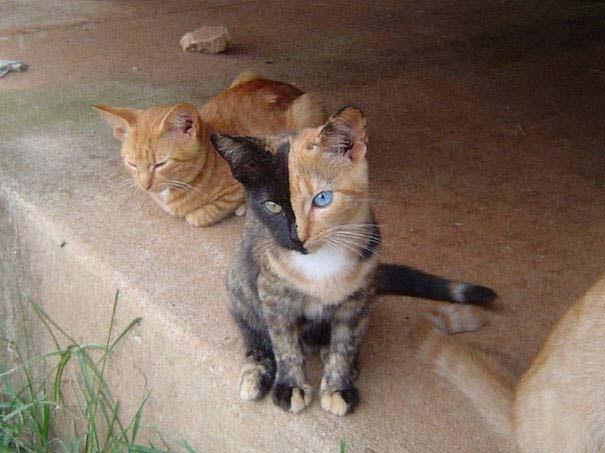 Γάτες που έγιναν διάσημες χάρη στα σημάδια της γούνας τους (3)