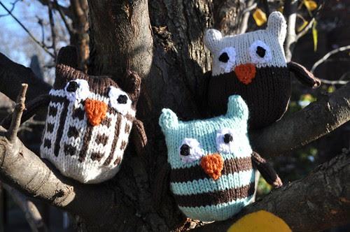 OwlsTree.jpg