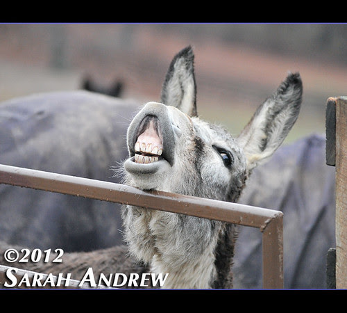 What Helping Hearts Equine Rescue, Inc. visit is complete without a photo of the best donkey ever, Jefferson Airplane?
