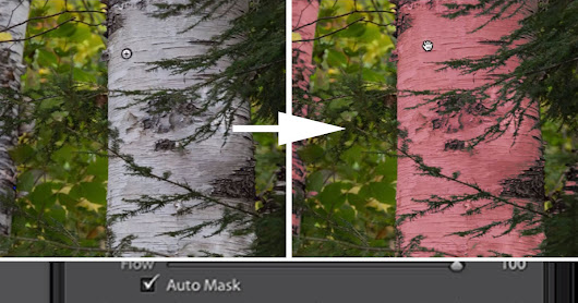 How to Use the Auto Mask Feature in Lightroom to Target Your Edits