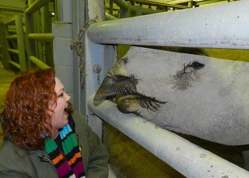 rhino and me