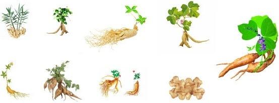 herbal series sd 01