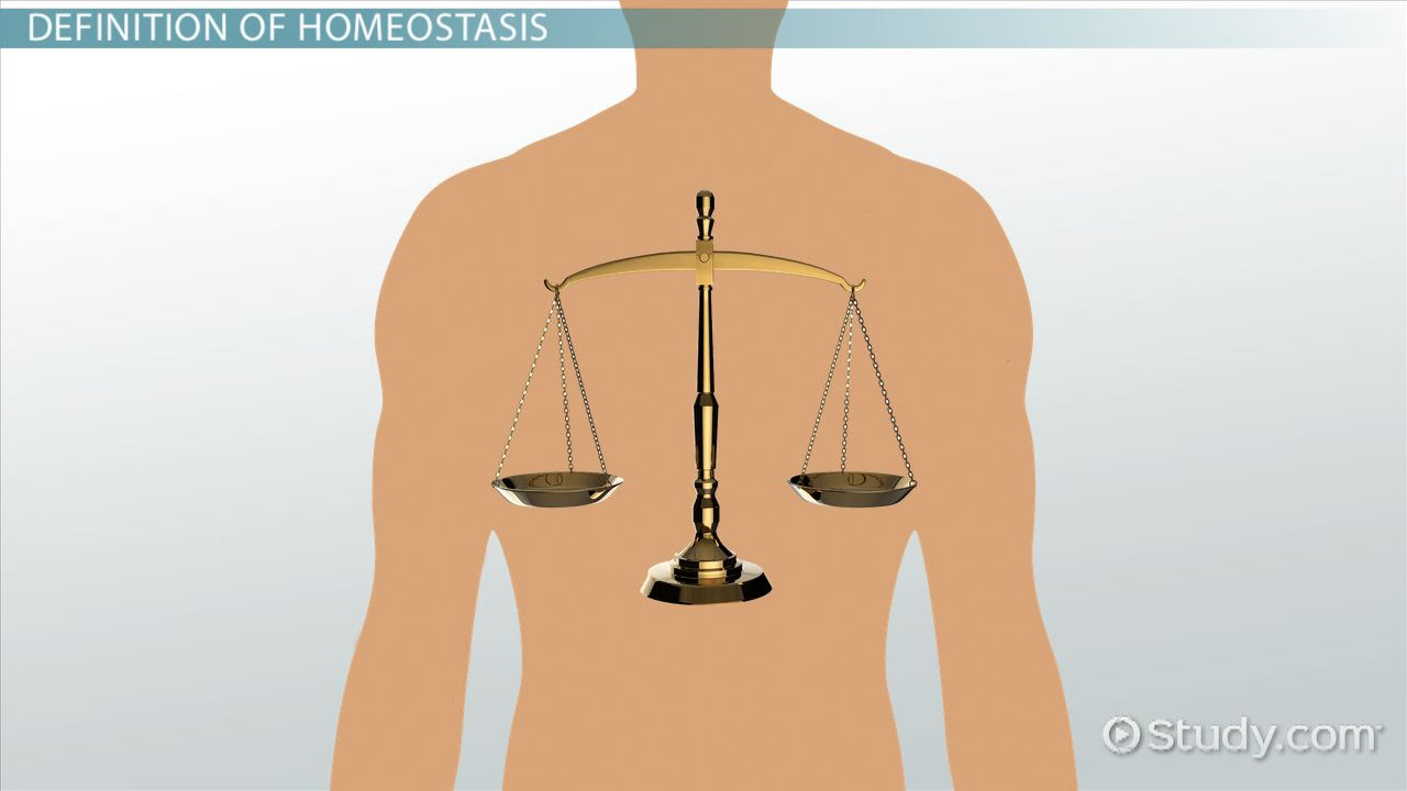 what is homeostasis definition examples quiz_01012529_109856