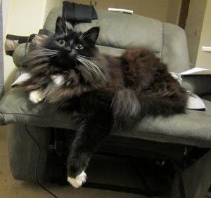 alarmed-chair-cat