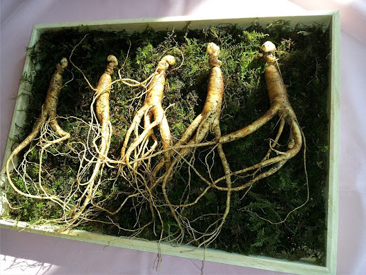 The Amazing Health Benefits of Ginseng