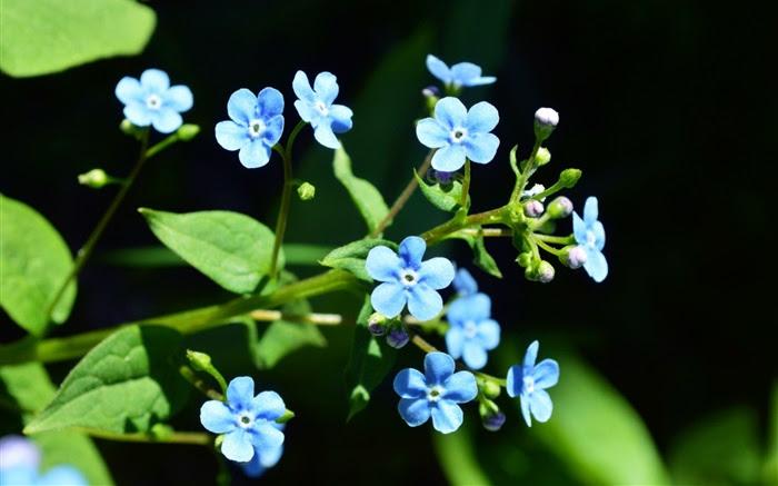 Flores Azules Fondo De Pantalla