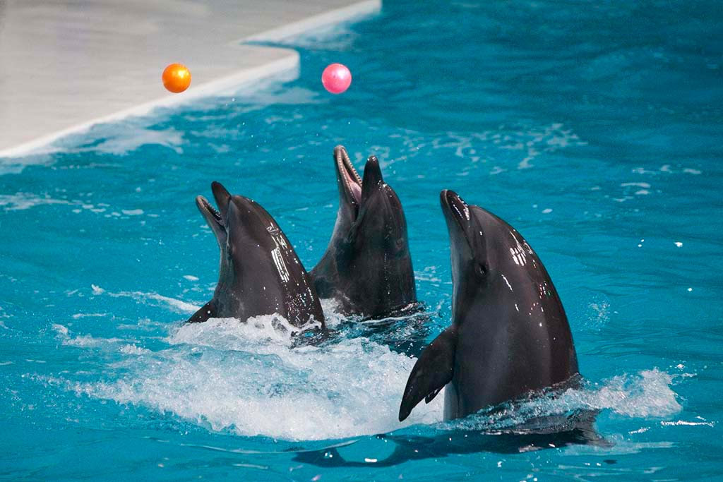 Dubai Dolphinarium Dubai Map,Dubai Tourists Destinations and Attractions,Things to Do in Dubai,Map of Dubai Dolphinarium Dubai,Dubai Dolphinarium Dubai accommodation destinations attractions hotels map reviews photos pictures