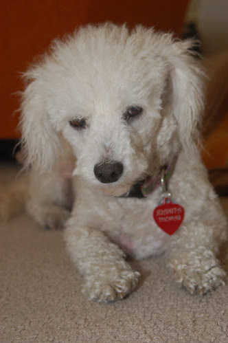 June 24: My Pretty Dog