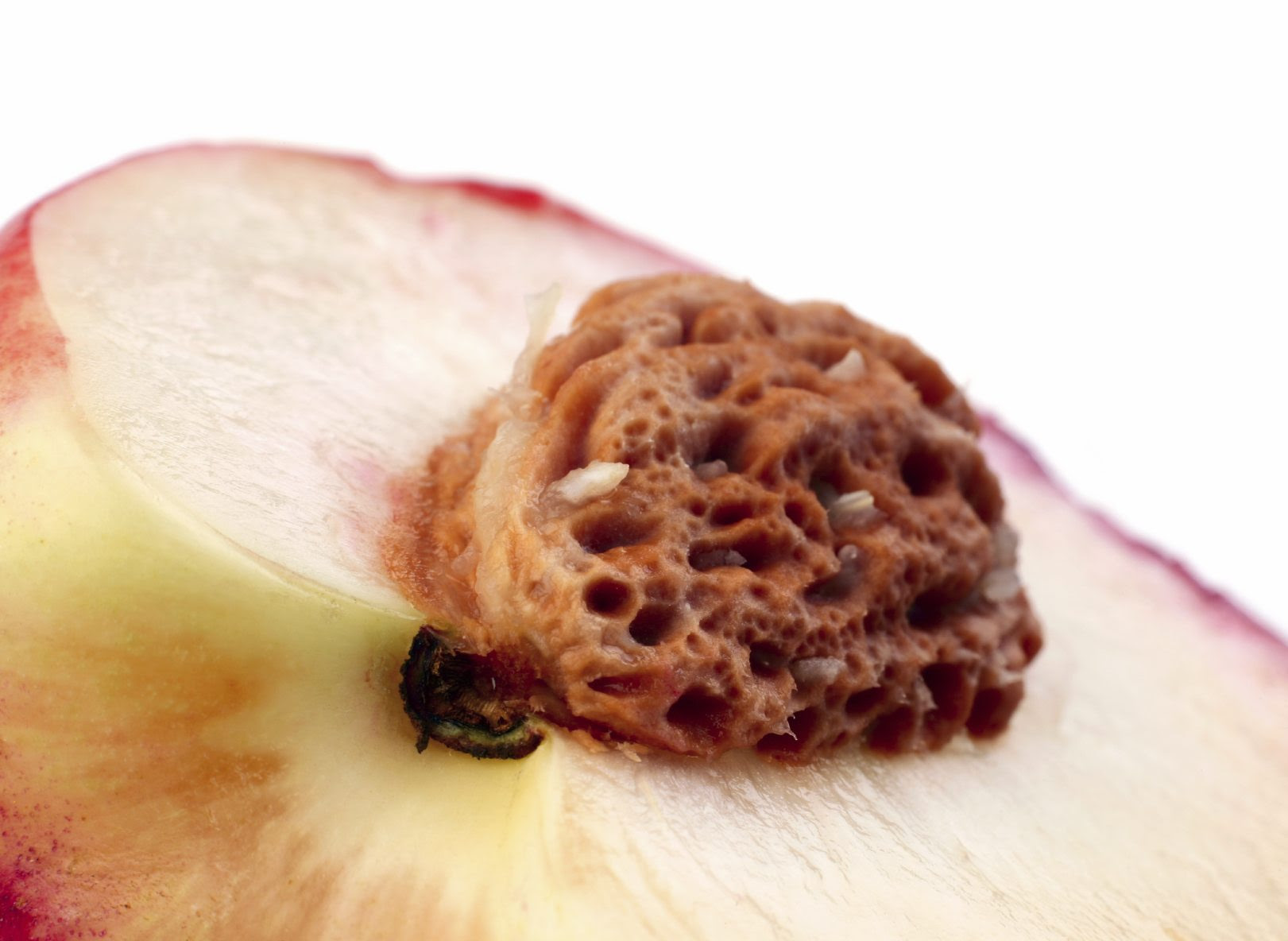 Storing Peach Seeds: Can You Save Peach Pits For Planting ...