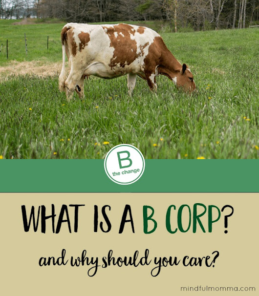 How Buying from a B Corp is a Force For Good