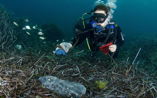 Johnson & Johnson ditch plastic cotton buds to save oceans