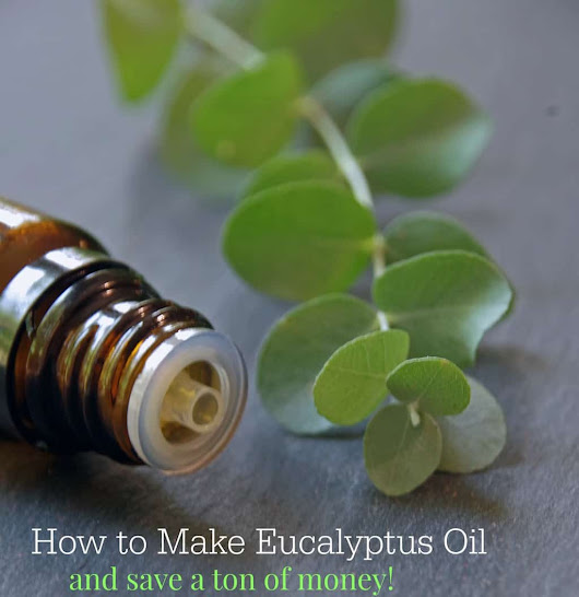 How to Make Eucalyptus Oil and Save a Ton of Money!