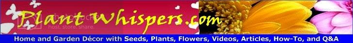 Midday News Plant Whispers Growing Beautiful Flowers For The Home and Grand Gardens For Your Backyard How-To Videos