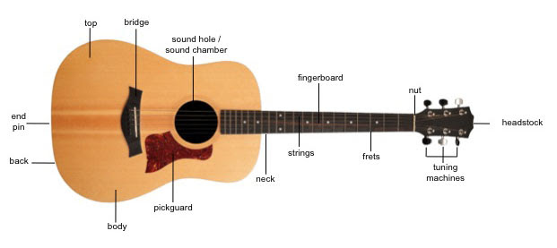 Body - The Physics of Acoustic Guitars