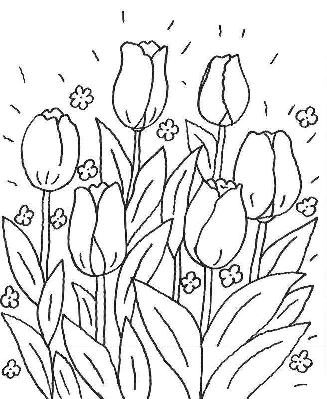 Ausmalbilder Blumen Wiese