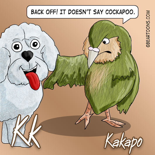 K is for Kakapo - Bearman Cartoons