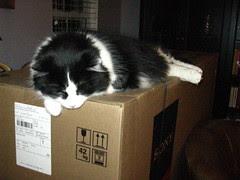 Josie on her new box