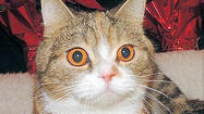 Adoptable Animals December 11, 2014 [Pictures]