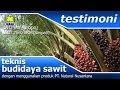 Testimoni Produk Pupuk Organik NASA Pada Kebun Kelapa Sawit di Tulang Bawang, Lampung.