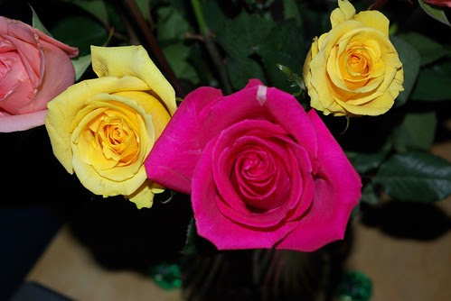 2007-12-07 AMEX Roses (3)