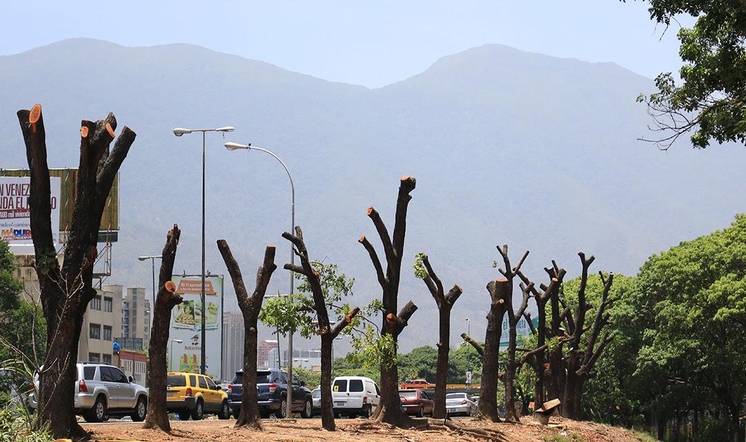 Árboles en la autopista Valle-Coche