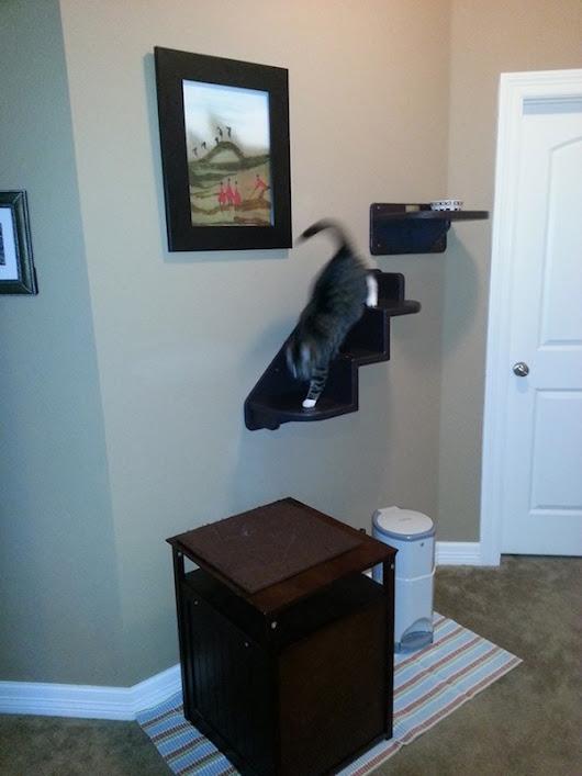 Catsplay Cat Furniture Google