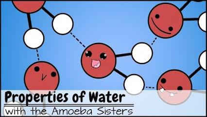 amoeba sisters google. Black Bedroom Furniture Sets. Home Design Ideas