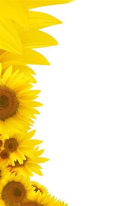 Bring in the Sunshine with Sunflower Wedding Invitations