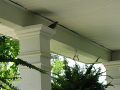 Bird on the front porch