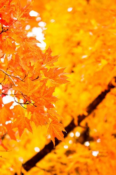 Autumn | Fall 2009 | Manhattan, KS