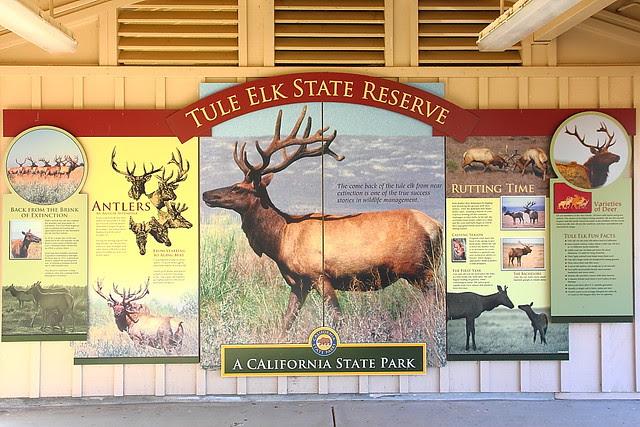 IMG_2715 Tule Elk State Reserve