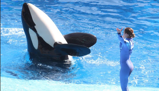 Killer whale at center of 'Blackfish' dies - Dolphin Way