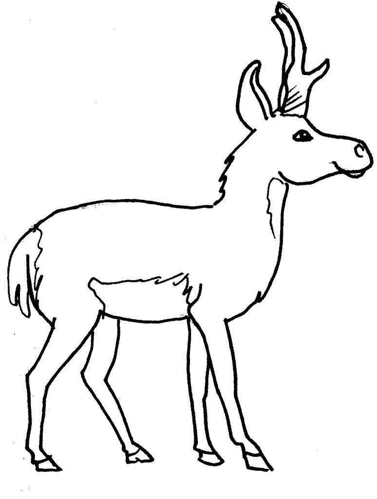 Dessin coloriage animal cerf ou elan animal foret