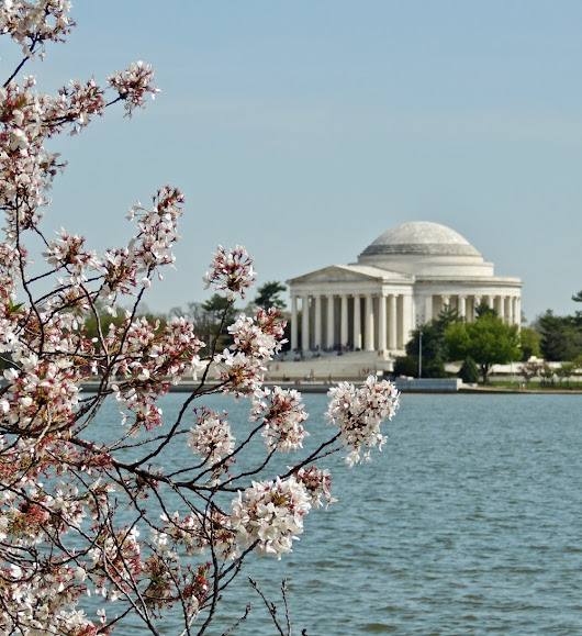 Postcards from D.C. - Cherry Blossom Festival