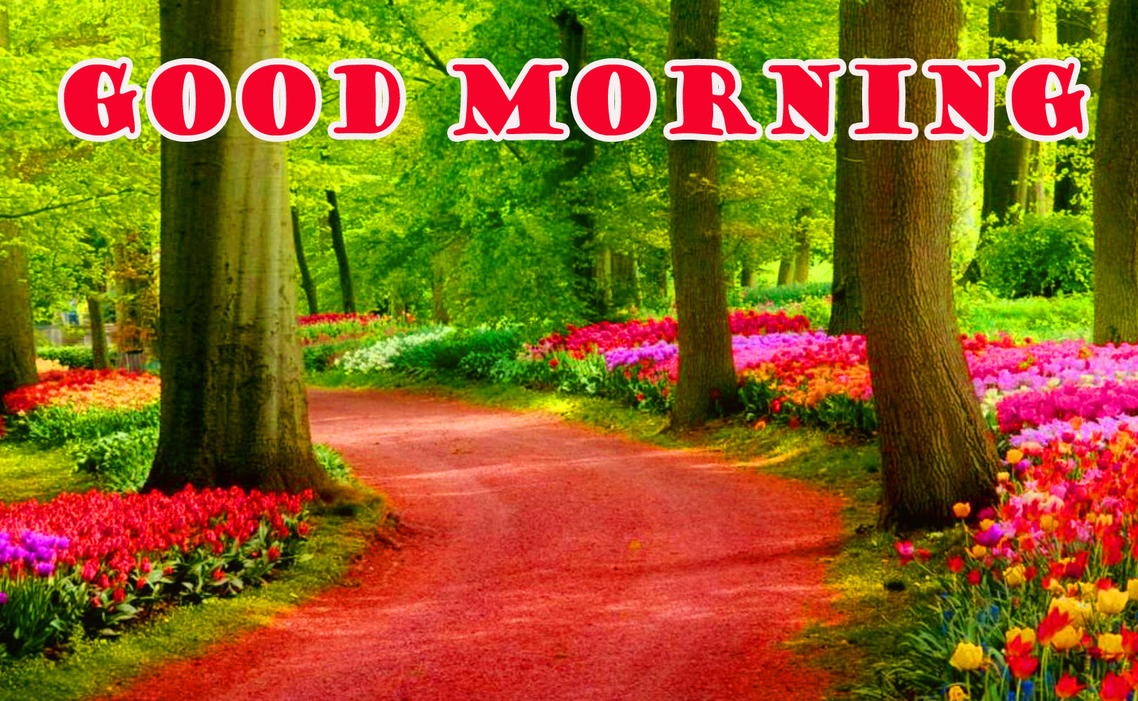552 Good Morning Nature Images Wallpaper Photo Pictures Download