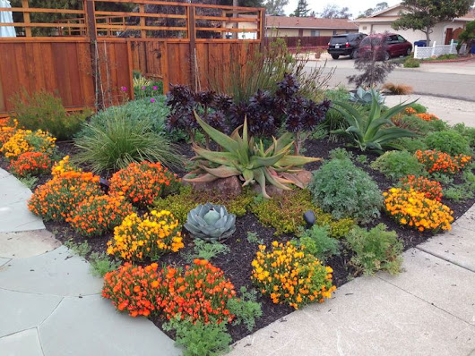 Save Water with Stunning Drought-Resistant Landscaping Solutions | Encinitas Realtor
