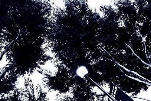 Trees of Tsukuba Center