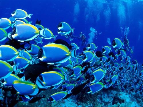 sophia hyatt khan_08. beautiful fishes wallpaper. Cute Fish wallpapers; Cute Fish wallpapers. SPUY767. Oct 24, 08:49 AM