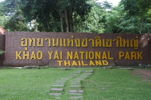 Two Blogs Coming Out Of Khao Yai National Park (November 2018)