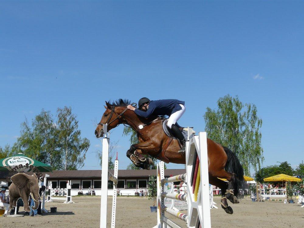 Springreiten 04, Pferde, Pferd, Horse, Turnier